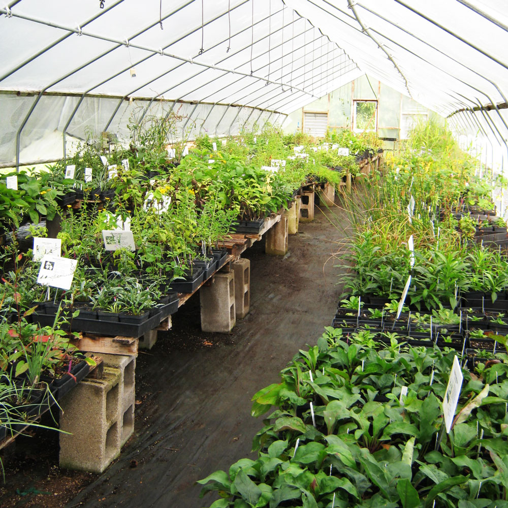 Local Genotype Native Plant Nursery