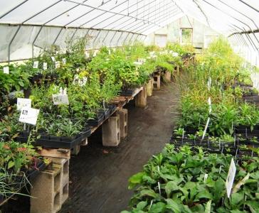 Local Genotype Native Plant Nursery