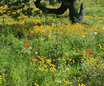 Natural Community Restoration
